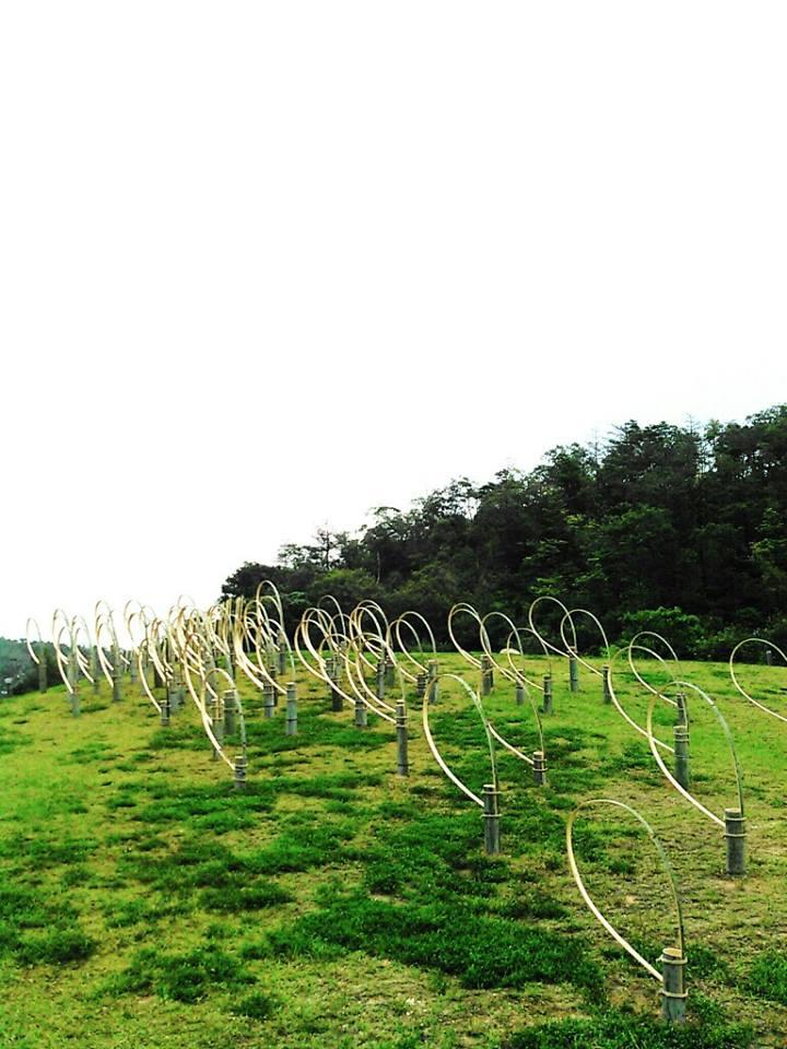 Answears blowing in the wind - Barbara Crimella